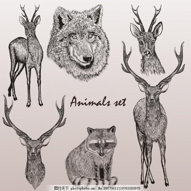 森林动物手组 一方面 自然 手绘 鹿狼 绘图 绘制的 野生的
