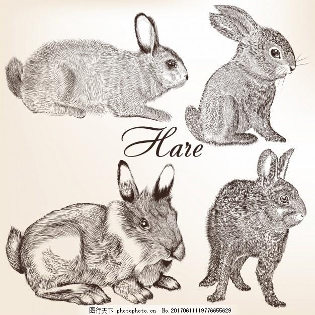 手工收集野兔 动物 手画 素描 绘画 野生 粗略 设置 野生动物