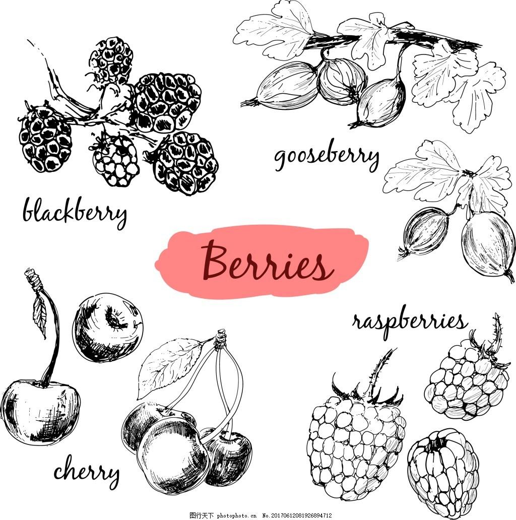 手绘水果插画 树莓 樱桃 黑白 素描 植物