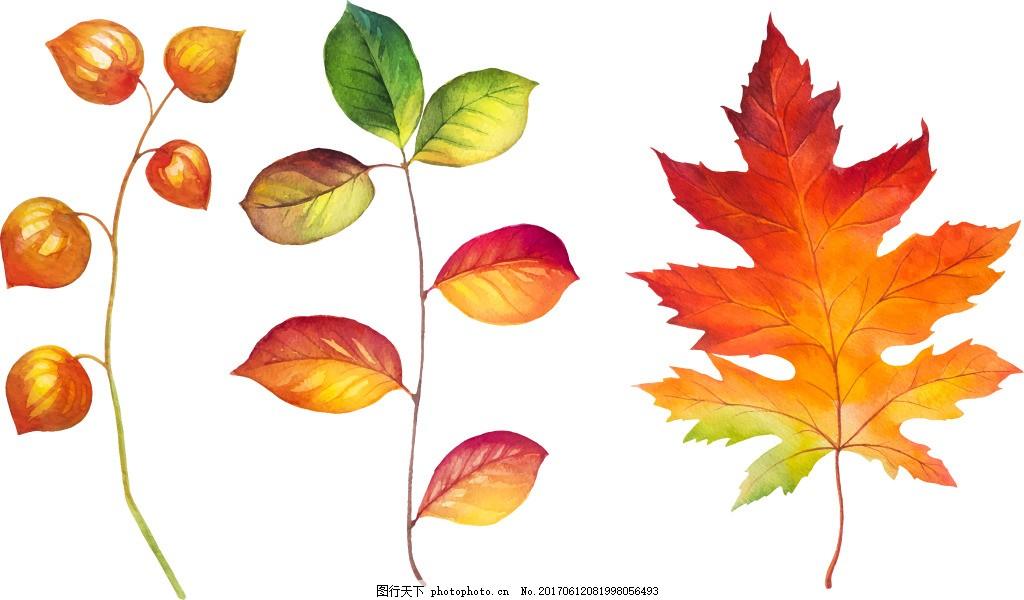 水彩绘叶子 植物 手绘 枫叶 渐变 唯美
