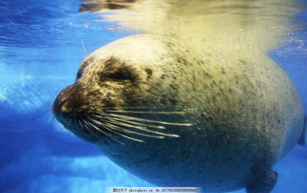 海狮 海洋动物 海豹 蓝色大海 水族馆 摄影