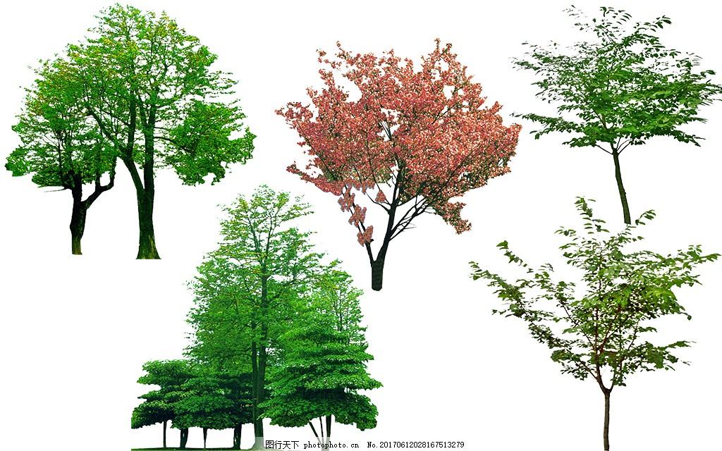 樱花樱桃树树木psd免扣素材