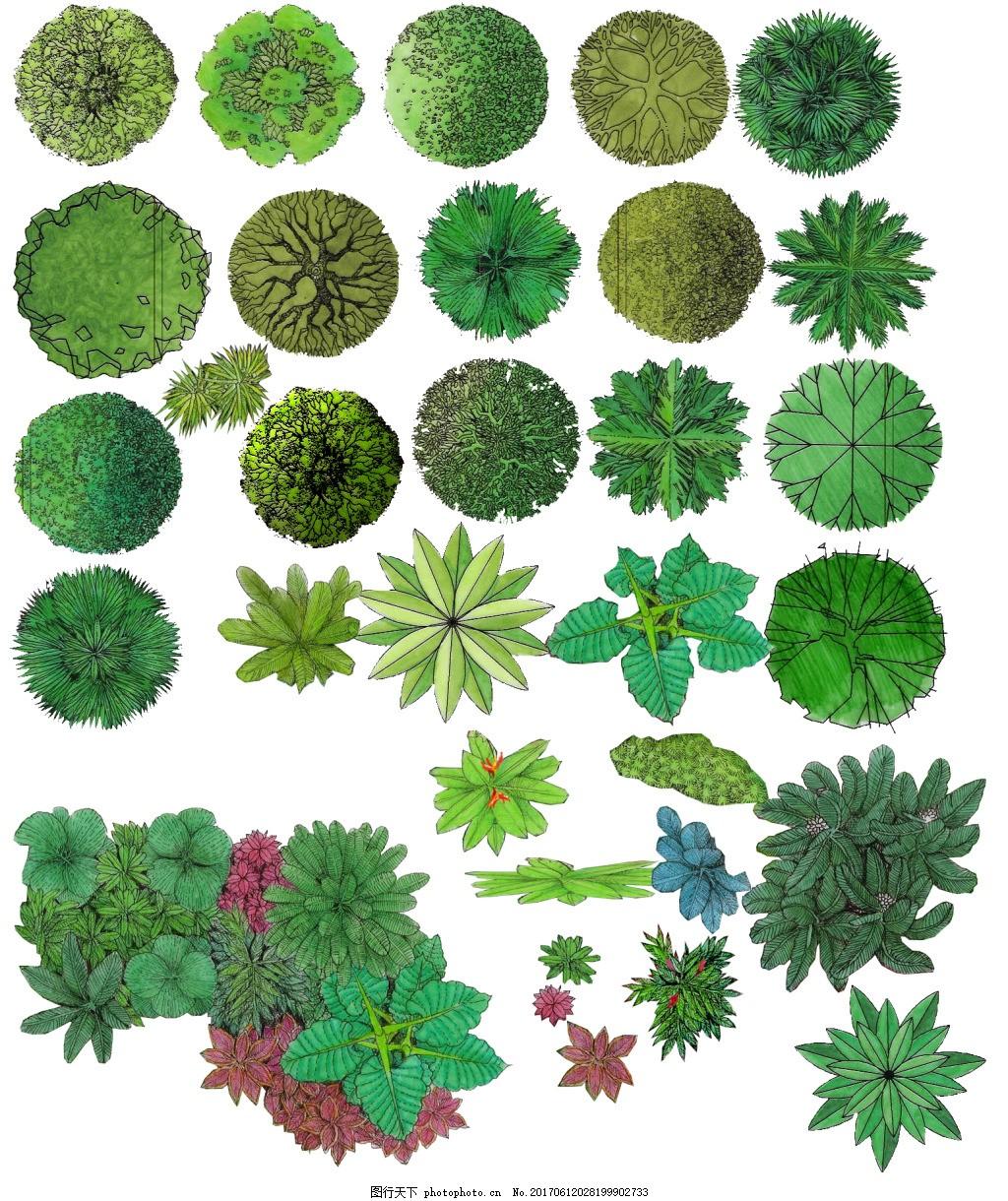 植物平面图素材--乔木 (9)