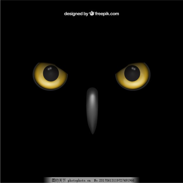猫头鹰的眼睛 鸟 动物 黄色