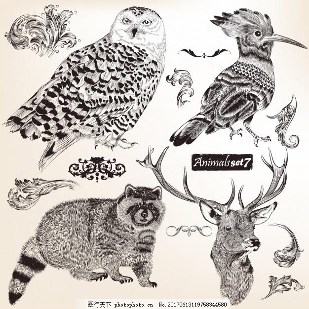 收集动物标本 手鸟 手画 猫头鹰 鹿 素描 绘画 野生 粗略