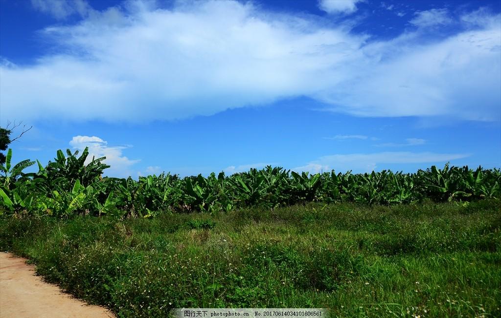 蓝天 芭蕉 绿道 好天气 绿色 摄影 旅游摄影