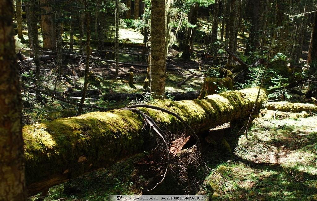 原始森林 树林 森林
