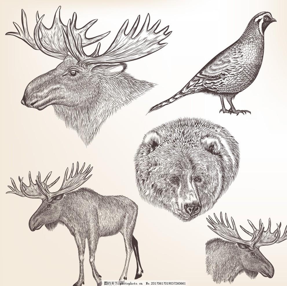 线描手绘动物 线稿 线条 麋鹿 棕熊 鸟雀 手绘稿 绘画艺术 卡通动物