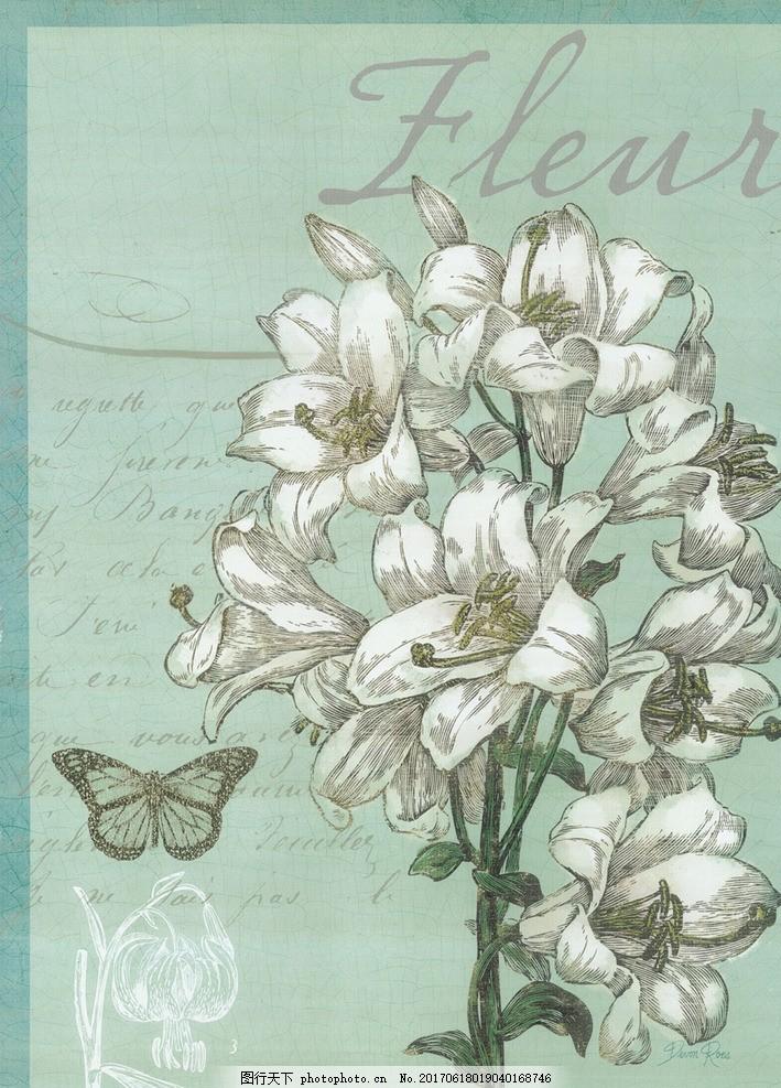 美式手绘动植物 装饰绘画 欧美复古 装饰画 工笔画 昆虫 蝴蝶 物种