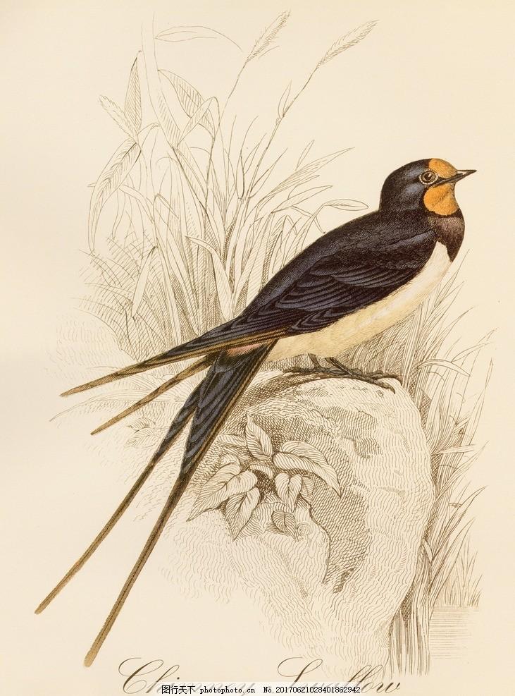 欧式鸟雀植物 装饰绘画 欧美 复古 鸟雀 树枝 手绘 绘画装饰 装饰画