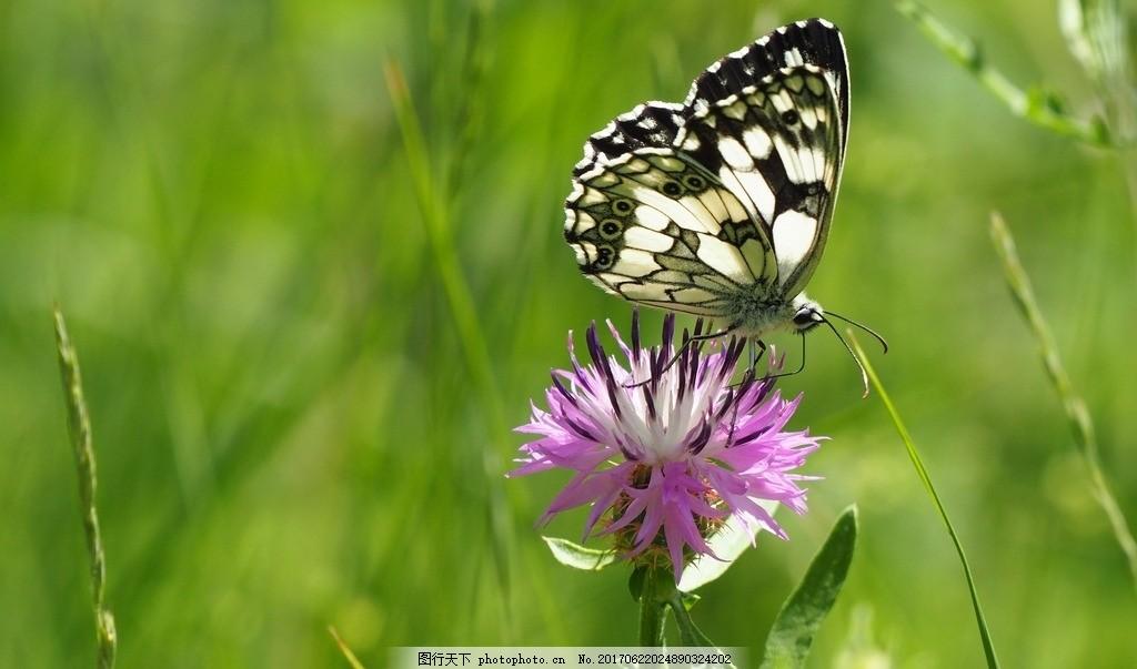枝干 绿叶 绿色叶子 休 息 停歇 休憩 唯美蝴蝶 漂亮花朵 昆虫 动物