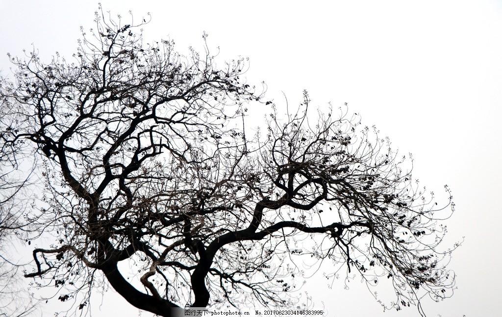 树枝剪影 树木剪影 剪影 黑白树 艺术 黑白 摄影 旅游摄影 自然风景