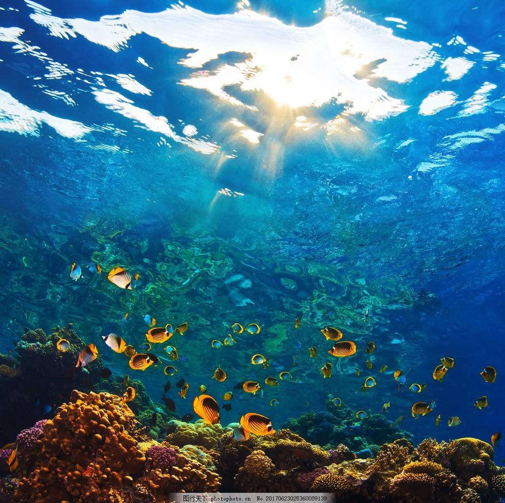 海底世界 梦幻海底 海底素材 海底背景墙 立体海洋 个性海洋 海底之窗