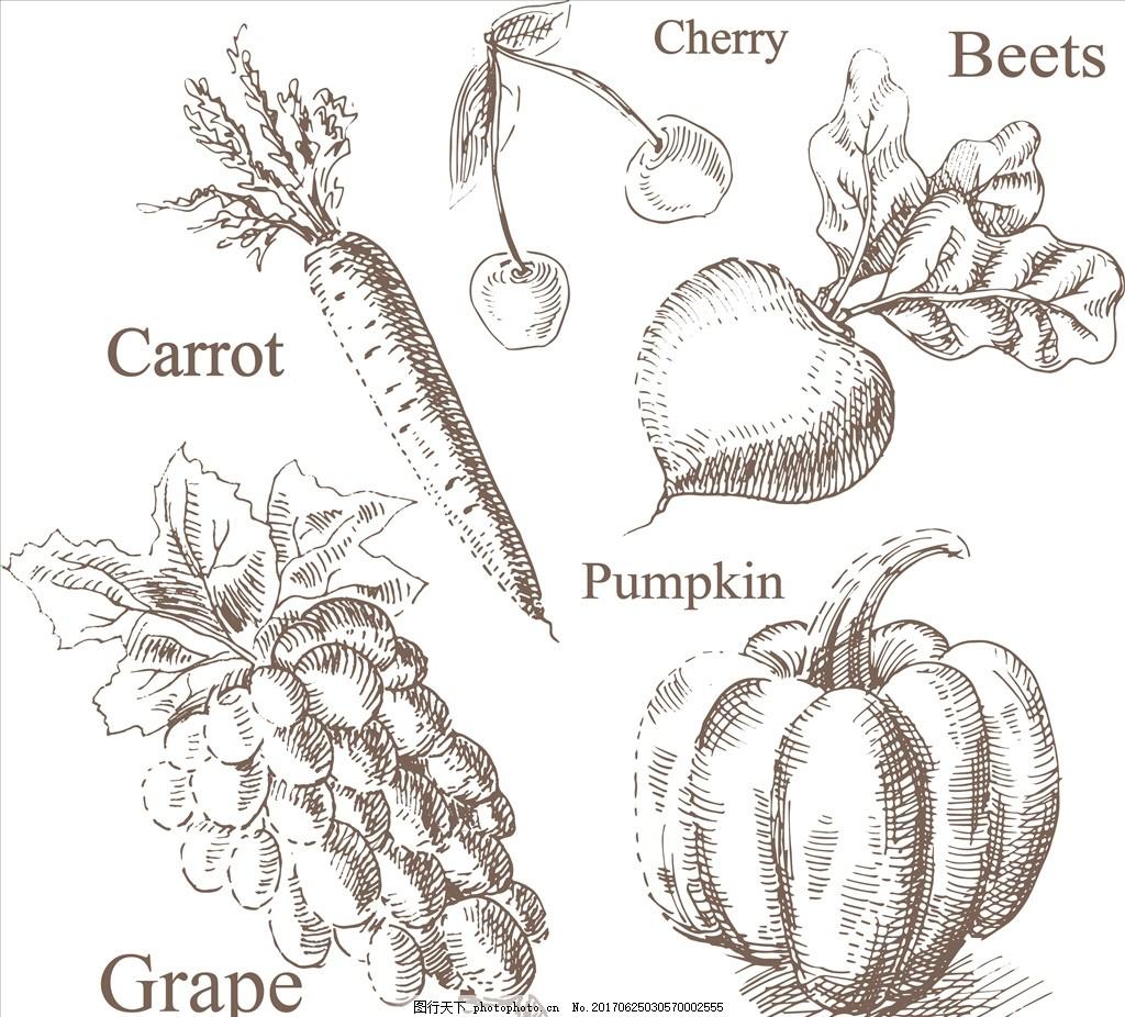 初学者手绘线稿水果