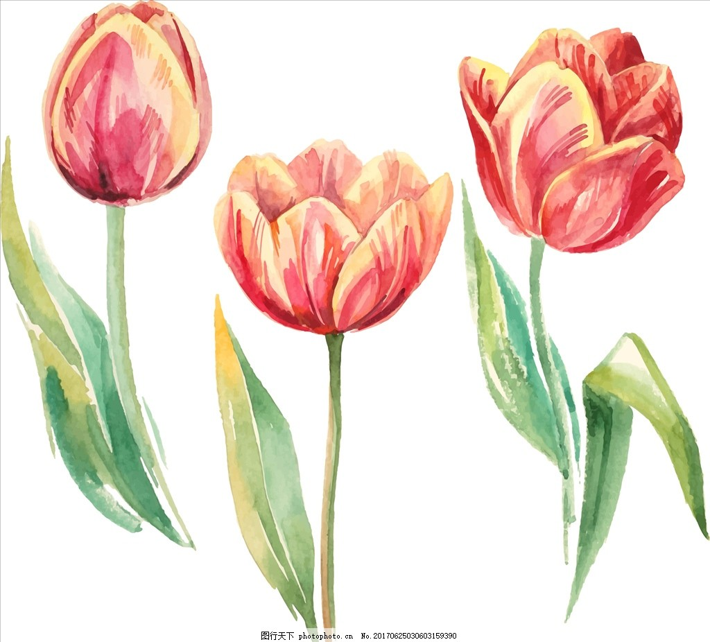 三朵郁金香矢量图下载 花 小花 手绘花朵 植物 花朵花卉 植物花朵