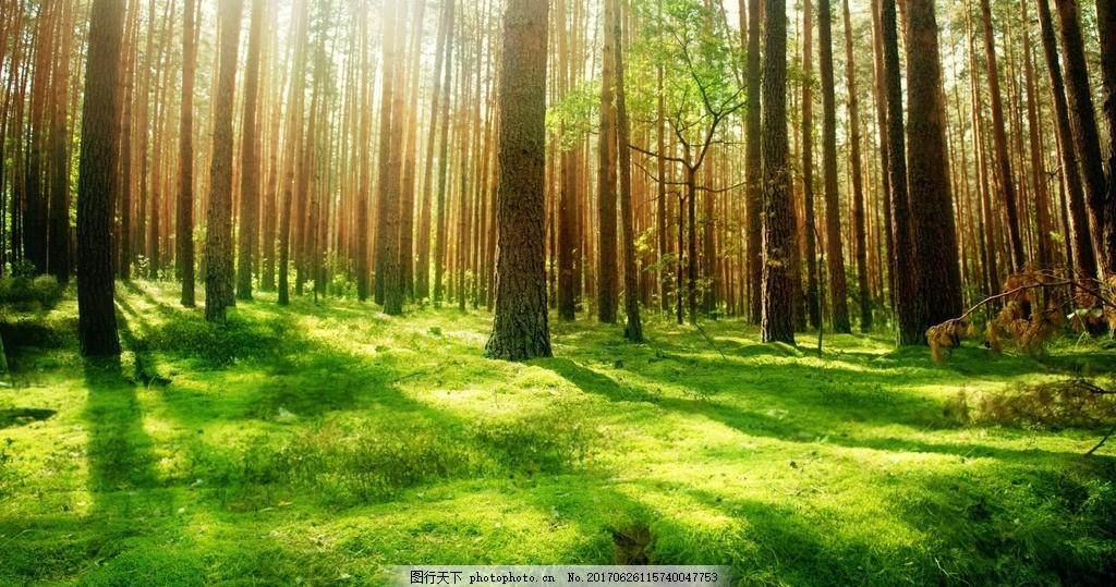 光照森林高清壁纸