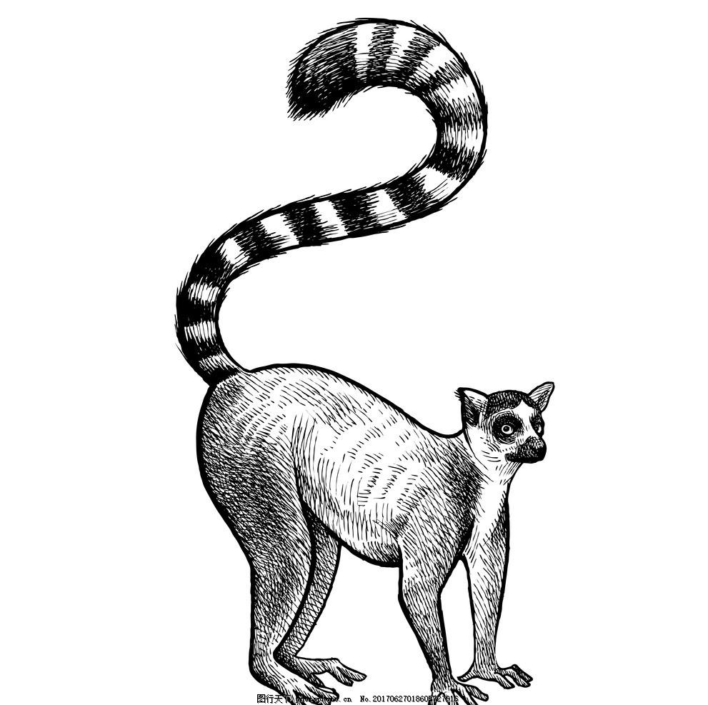 非洲草原动物 动物插画 儿童绘本 儿童画画 卡通动物漫画 儿童插画