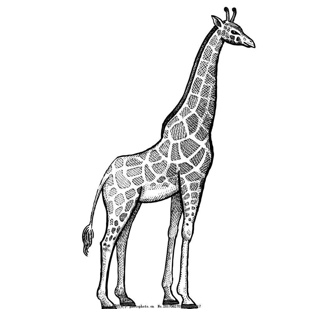 壁纸 动物 简笔画 鹿 手绘 线稿 991_987