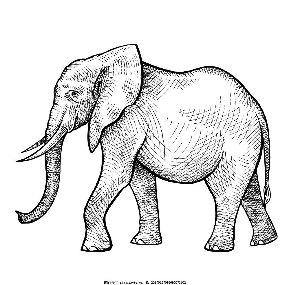 大象 动物插画 儿童绘本 儿童画画 卡通动物漫画 儿童插画 童话