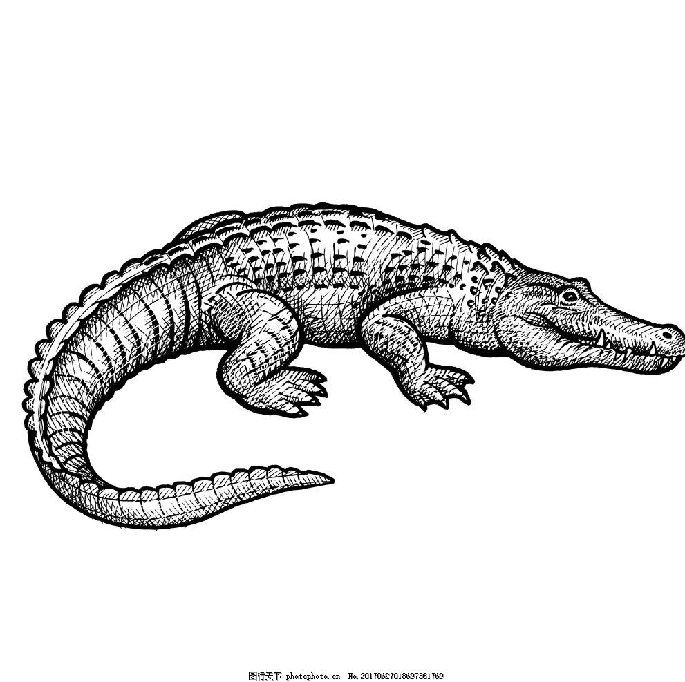 鳄鱼 动物插画 插画 儿童绘本 儿童画画 卡通动物漫画 儿童插画 童话