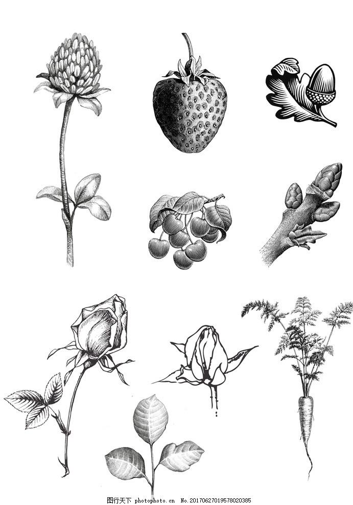 植物线描 植物 素材 线描 黑白稿 水果 蔬菜 设计 文化艺术 其他 300d图片