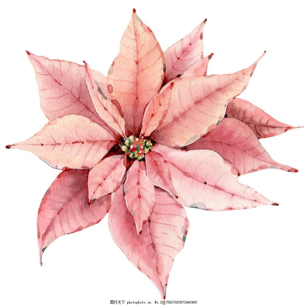 水彩植物 彩绘 花卉 矢量图 素材 水彩 清新 可爱 花朵 花环 美丽