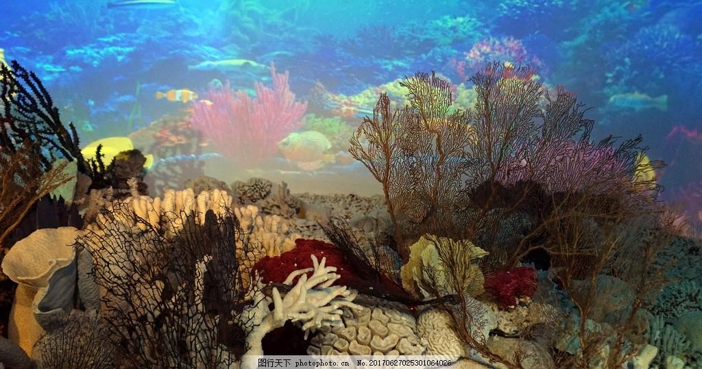 海底世界 海洋 大海 海底岛礁 珊瑚岛 摄影