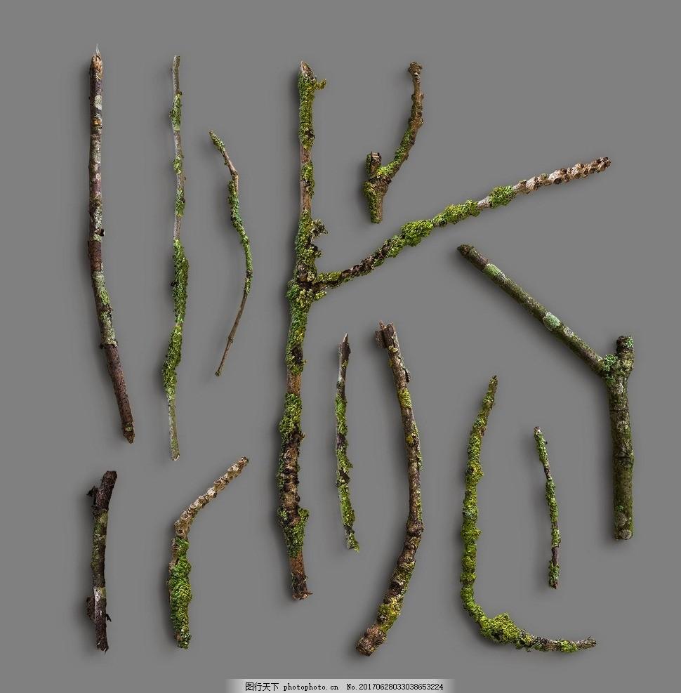 枯树枝 植物素材 植物造景 树枝 树枝剪影 贺卡 卡片 大自然 插画