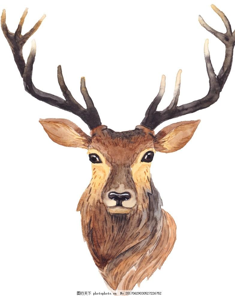 水彩麋鹿 水彩 麋鹿 动物插画 插画 儿童绘本 儿童画画 卡通动物漫画