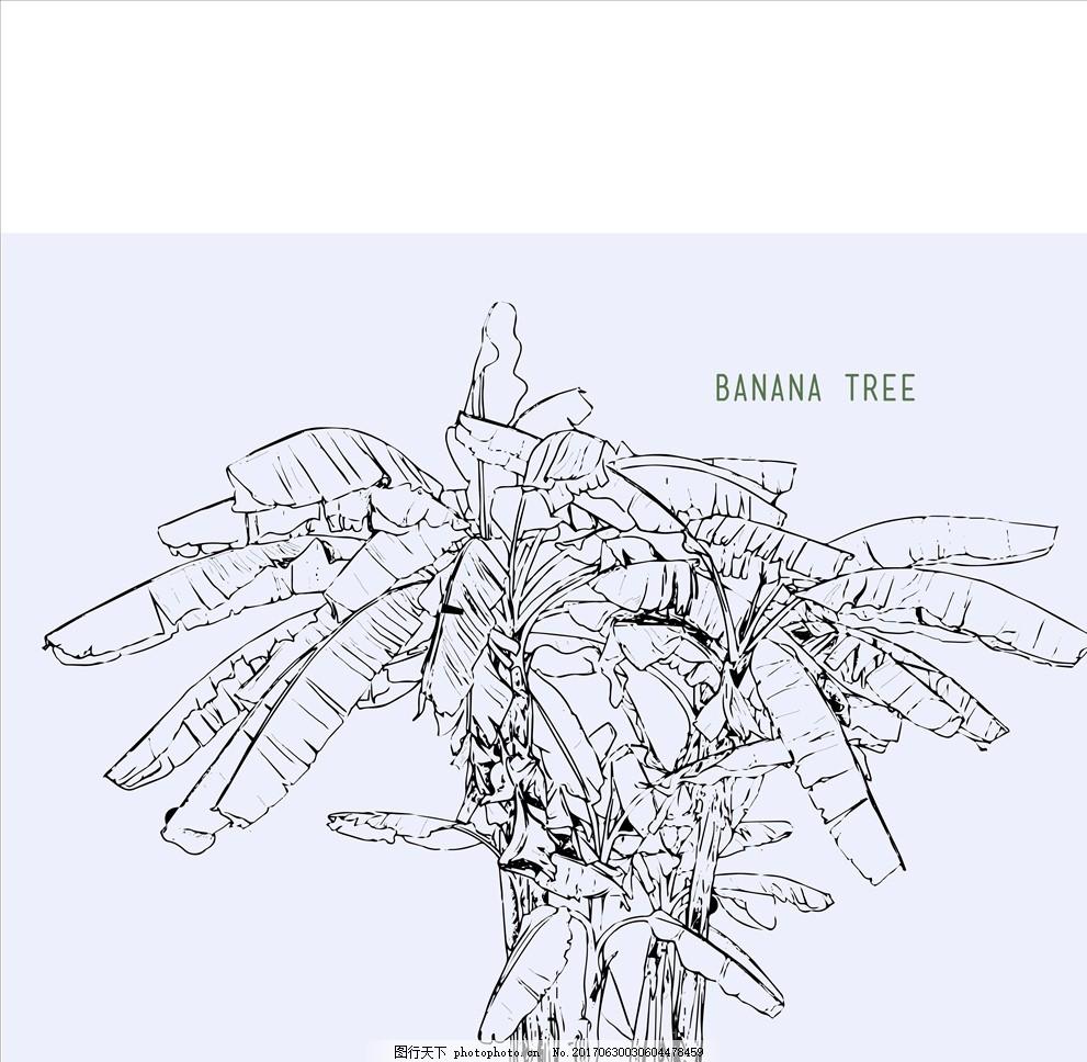 手绘线描香蕉树矢量图下载